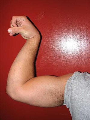 Biceps - Image: Arm flex pronate