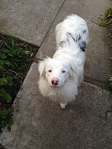 Dog Eye White Solid Red