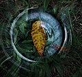 Autumn Leaf Throgh Glass.jpg