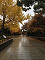 Autumn leaves in a rainy day at Hiroshima Peace Memorial Park.jpg
