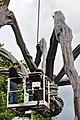 Bürkliplatz - Demontage 'Maman' 2011-07-28 20-05-58.jpg