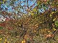 Bacche d'Acuto - panoramio.jpg