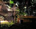 Backyard (356347392).jpg