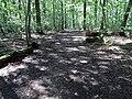 Balade en Forêt de Verrières le 20 août 2017 - 005.jpg