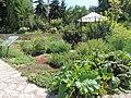 Balchik Botanical Garden 2017 06.jpg