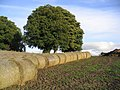 Bales ready for uplifting near Birseslees - geograph.org.uk - 253606.jpg