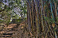 Bamboo Grove (8136505304).jpg
