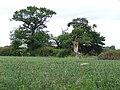 Barley field - geograph.org.uk - 853836.jpg