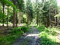 Basaltweg Tharandter Wald (2).jpg