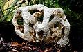 Basket Fungi. (13840018933).jpg