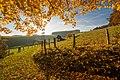 Beautiful Sauerland (128950321).jpeg