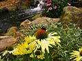 Bee-Yellow-Cone-Flower-Stream ForestWander.jpg