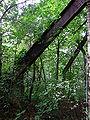 Beelitz Heilstätten -jha- 259395605480.jpeg