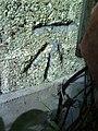 Benchmark on ^41 Boxhill Road - geograph.org.uk - 2071202.jpg