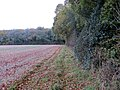 Beside Rag Copse - Nov 2012 - panoramio.jpg