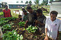 Bethesda agriculture studies teacher Thelma Awasi supervises weeding in the specially designed wheelchair accessible garden beds. All gardening is organic and the vegetables help feed the staff and students. (10676974125).jpg
