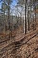 Big Hill Pond State Park trail 3.jpg