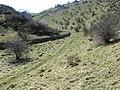 Biggin Dale - geograph.org.uk - 1231026.jpg