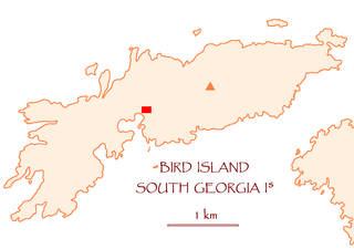 Bird Island, South Georgia Place in South Georgia and the South Sandwich Islands, United Kingdom