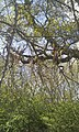 Birmingham, UK - panoramio (44).jpg