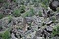 Black Canyon Schist (Paleoproterozoic, 1.759 Ga; No Thoroughfare Canyon, Colorado National Monument, Colorado, USA) 3 (23570940679).jpg
