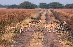 Bhavnagar district - Blackbuck National Park