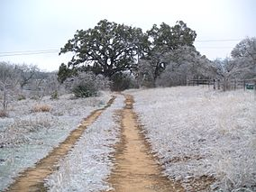 A photo of Blanco State Park with ice covering everything