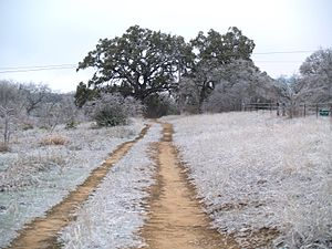 Blanco State Park - An icy day in Blanco State Park