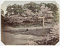 Bloesem in het Ueno-park in Tokyo Uyeno Park Tokio (titel op object), RP-F-F01196-M.jpg