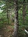 Bloomfield Provincial Park IMG 8265 (1849053338).jpg