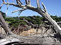 Blowing from Ocean - panoramio.jpg