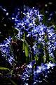 Blue (16919775250).jpg