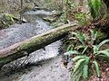 Boeing Creek, South Fork - Flickr - brewbooks.jpg