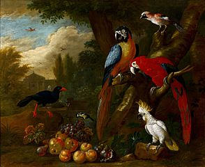 Two Macaws, a Cockatoo and a Jay, with Fruit