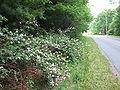 Boone roadside.jpg