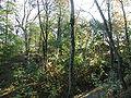Bornheim-Roesberg-Burg-PA300077.JPG