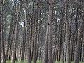 Bosc de Can Deu el 2004 02.jpg