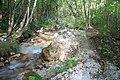 Bosco e torrente Acquabianca-Senerchia -Oasi naturale Valle della Caccia -Avellino 06.jpg