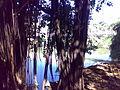 Bosque, ponte, rio (4869967441).jpg