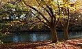 Botanic Gardens Christchurch.NZ (18850522192).jpg