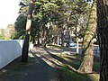 Bournemouth, tree-dodging pavement - geograph.org.uk - 688312.jpg