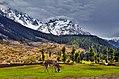 Boyun Meadow, Swat KPP (Pakistan).jpg