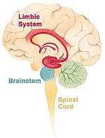 táplálék az agy és a látás számára