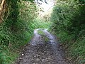 Bridlepath between East Prawle and Ham Stone - geograph.org.uk - 76601.jpg