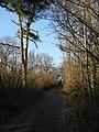 Bridleway through Pitt Wood - geograph.org.uk - 1100342.jpg