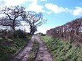 Bridleway to Preston-on-Wye - geograph.org.uk - 349075.jpg