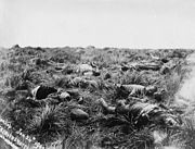 British casualties, Spionkop, 1900