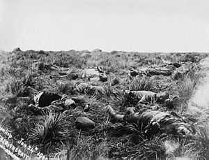 Medical treatment during the Second Boer War - British soldiers lie dead on the battlefield after the Battle of Spion Kop, 24 Jan 1900