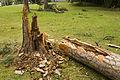 Broken Trees 1.jpg