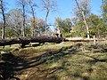 Browns Ravine 618 - panoramio.jpg